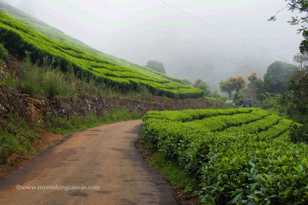 Blanket Hotel & Spa : The Ultimate Luxury Experience in Munnar ,Kerala